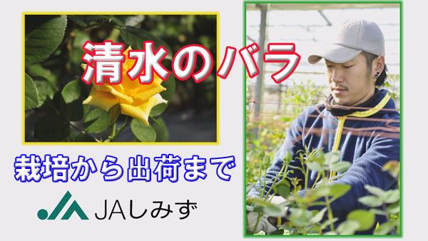 douga-channel-rose.jpg